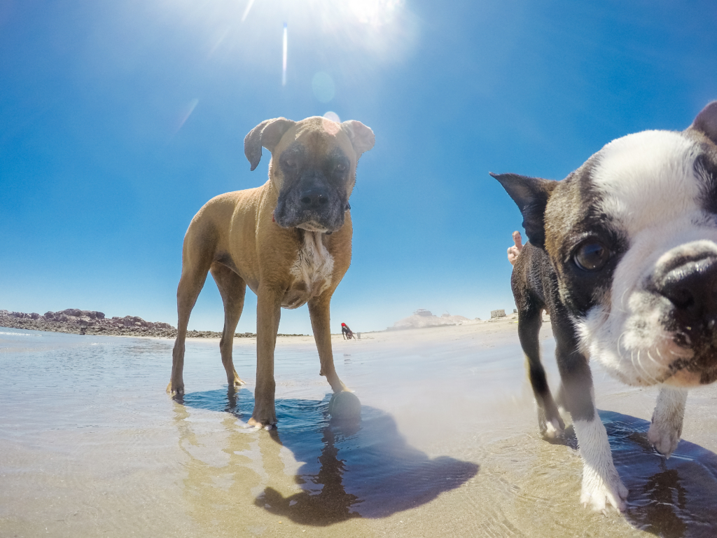 traveling-to-mexico-with-dogs
