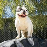 9 Instagram Dogs with over 1 Million Followers