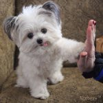 6 Instagram Dogs that have between 500,000 and 1 Million followers