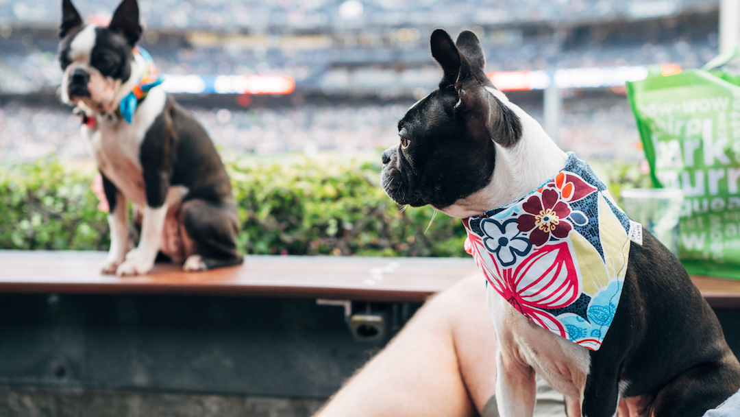 Dog Days of Summer at Petco Park and the Barking Yard