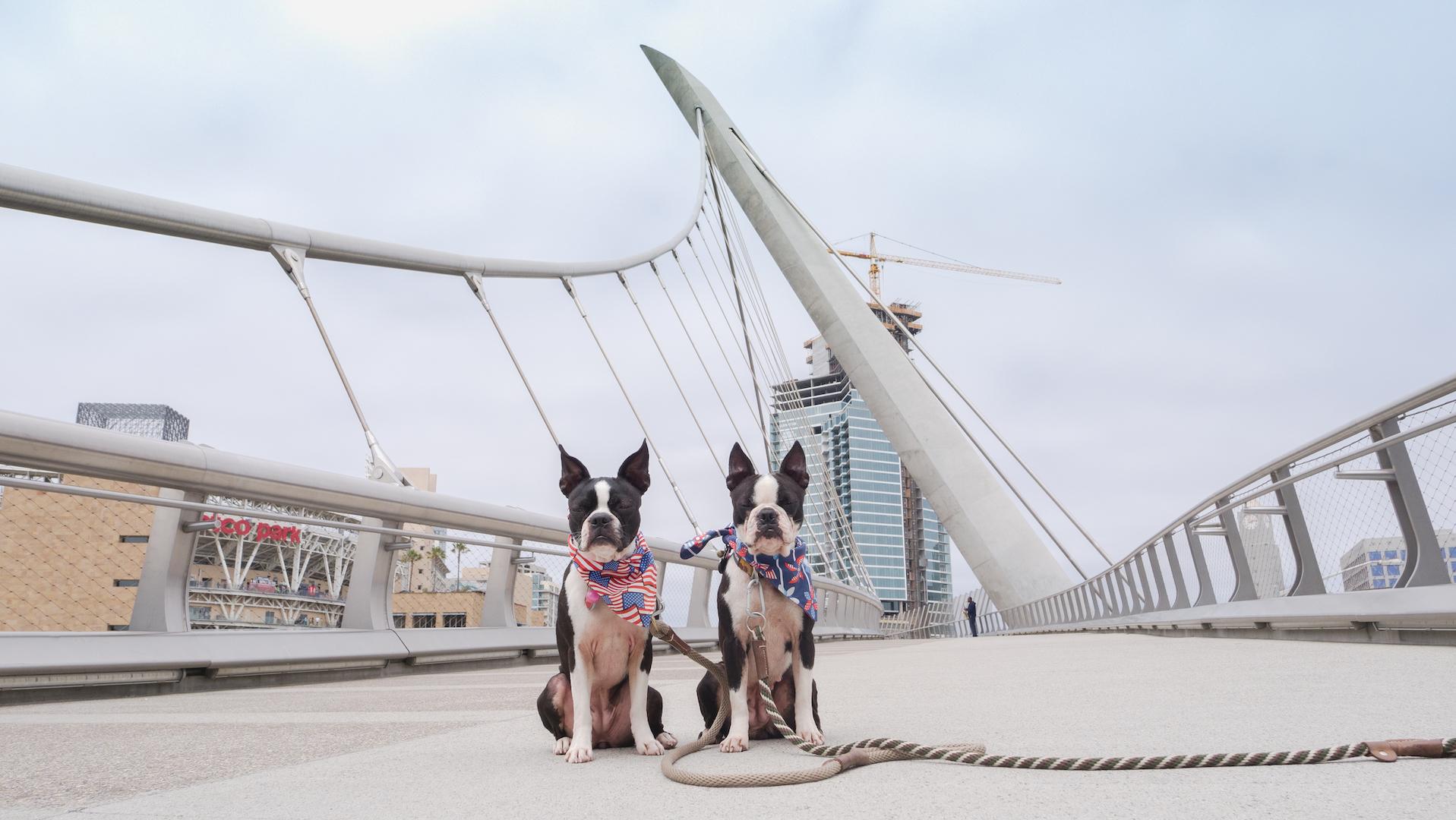 Pregaming for Petco Park's Dog Days of Summer & Barkyard Doggie Box Suites