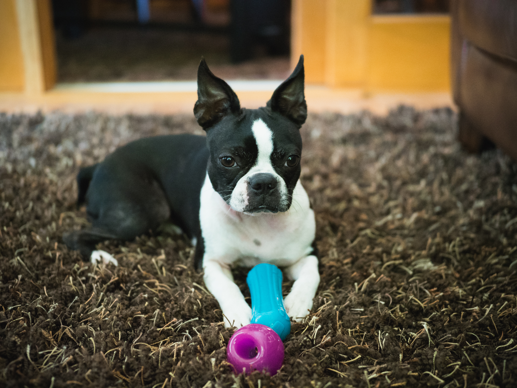 Sneaky Squeaky Stick and Bionic Ball Review