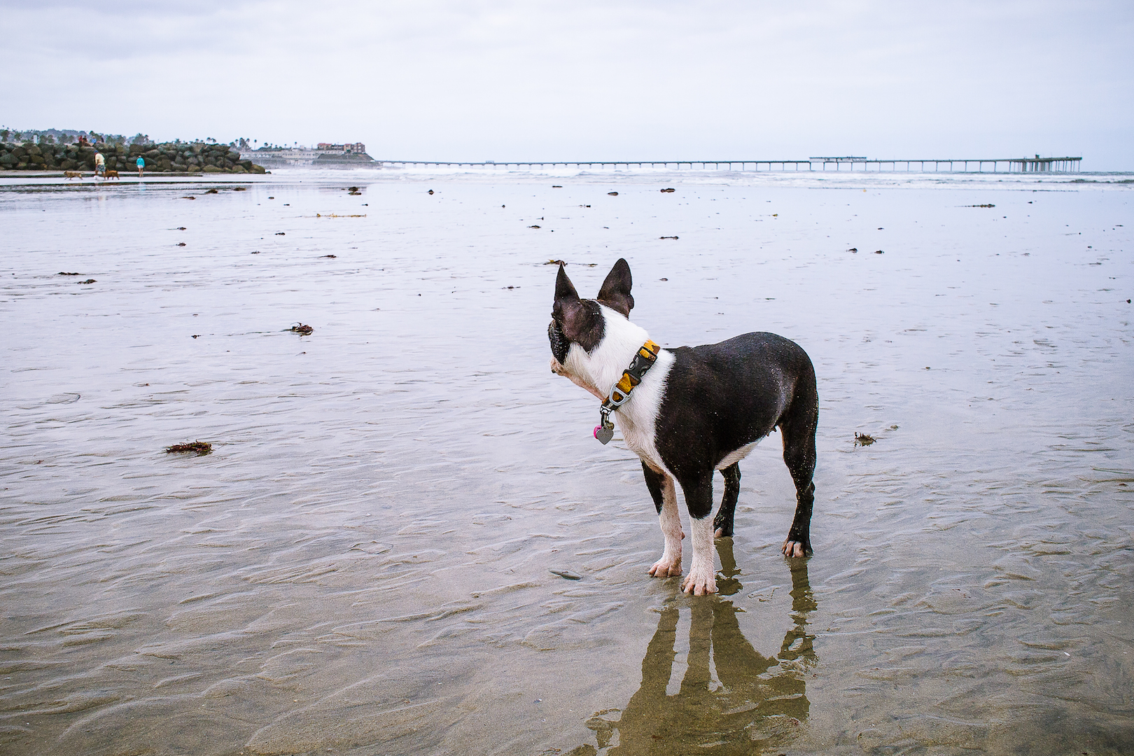 Safety Precautions when taking your Dog to the Dog Beach