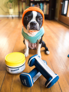 Easy Home Cooked Dog Food Recipe - Ground Pork with Yams, Squash and Kale