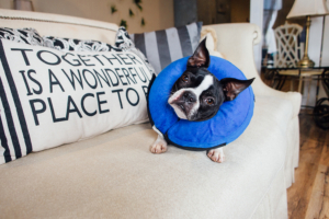 Dog Cone E-Collar Review