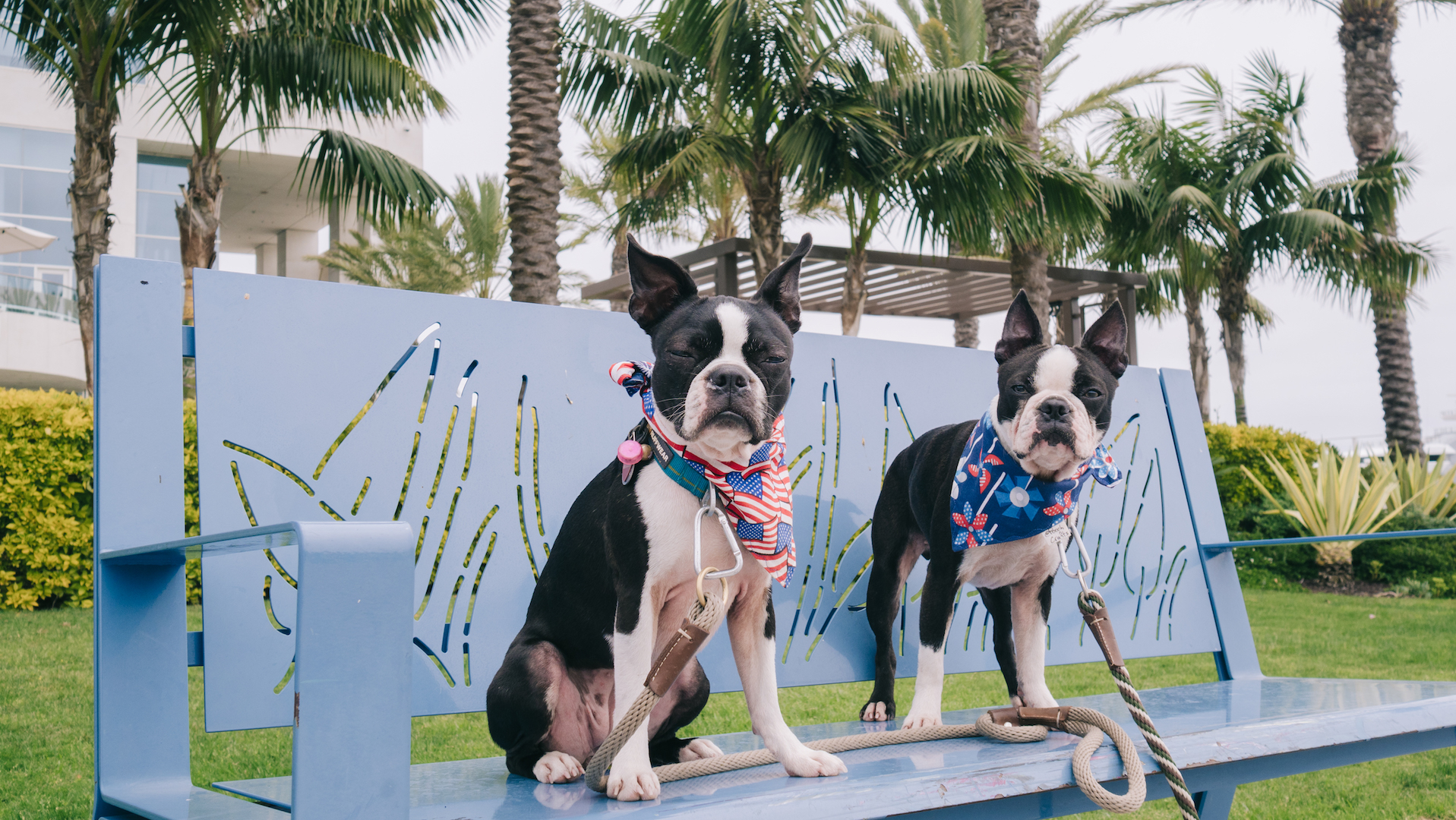 Pregaming for Petco Park's Dog Days of Summer & Barkyard Doggie Box Suites