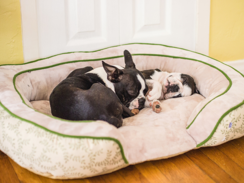two-puppies-napping-adding-second-dog