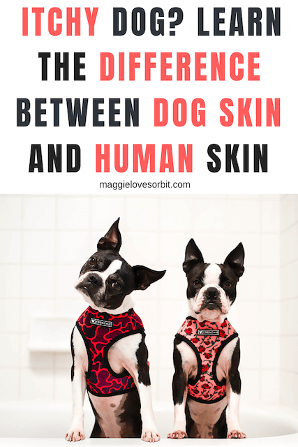 Itchy Dog?  Learn the difference between dog skin and human skin