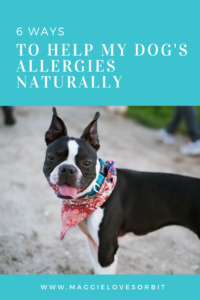 6 Ways To Help My Dog's Allergies Naturally
