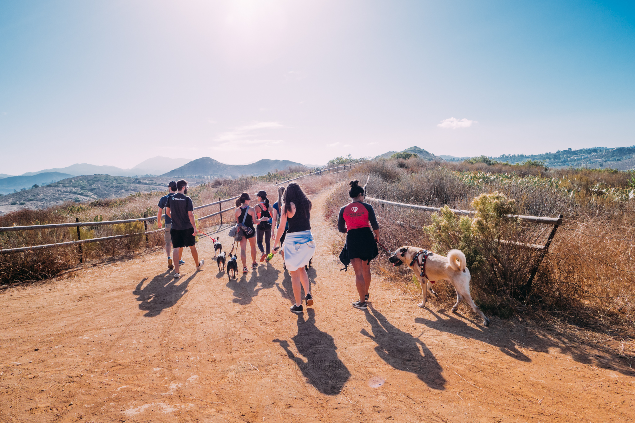 What's the benefits of a pack walk anyway?
