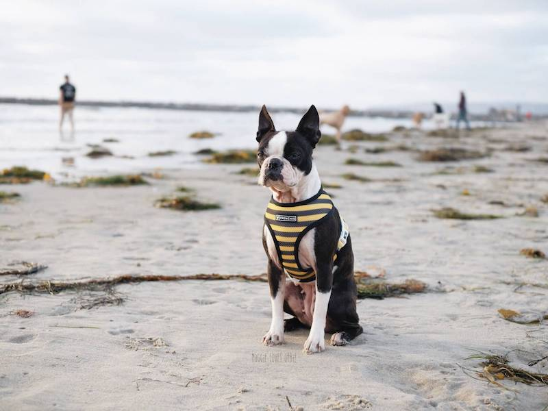Is Ocean Beach Dog Friendly