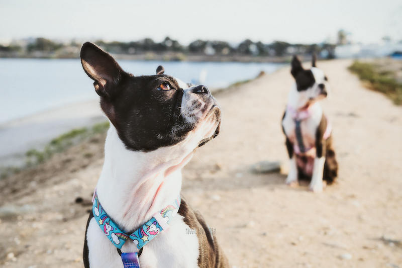 Tips on Fiesta Island Dog Beach
