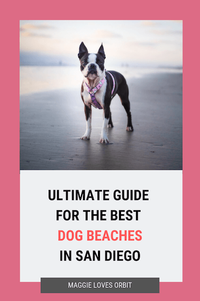 ultimate-dog-beach-guide-san-diego