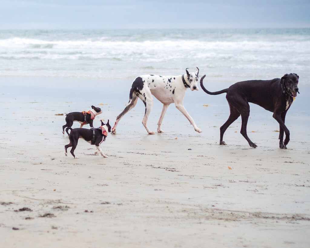 Is Del Mar Beach Dog Friendly