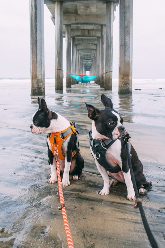 Is La Jolla Shores Beach Dog Friendly
