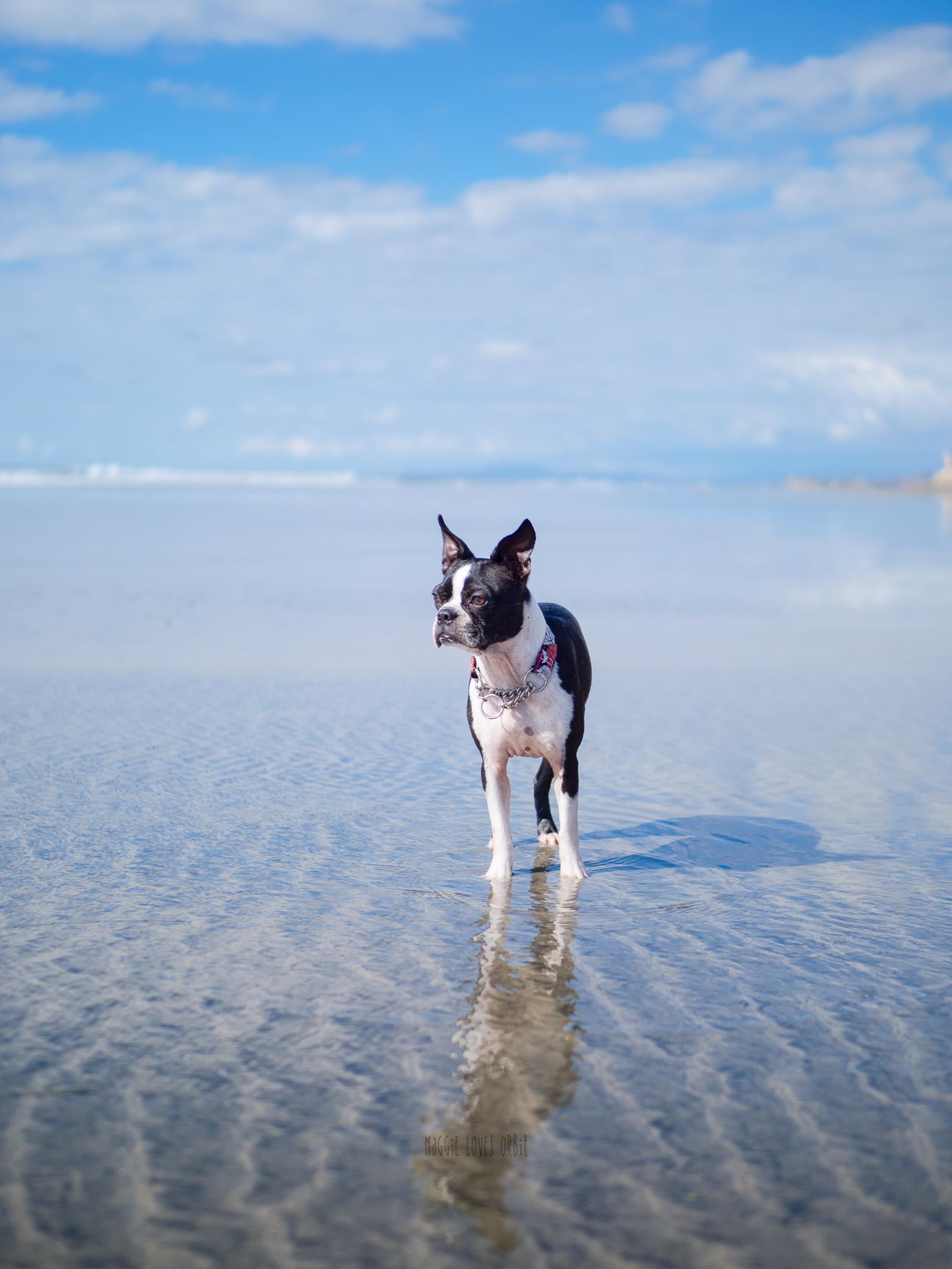 Best Dog Beaches in San Diego