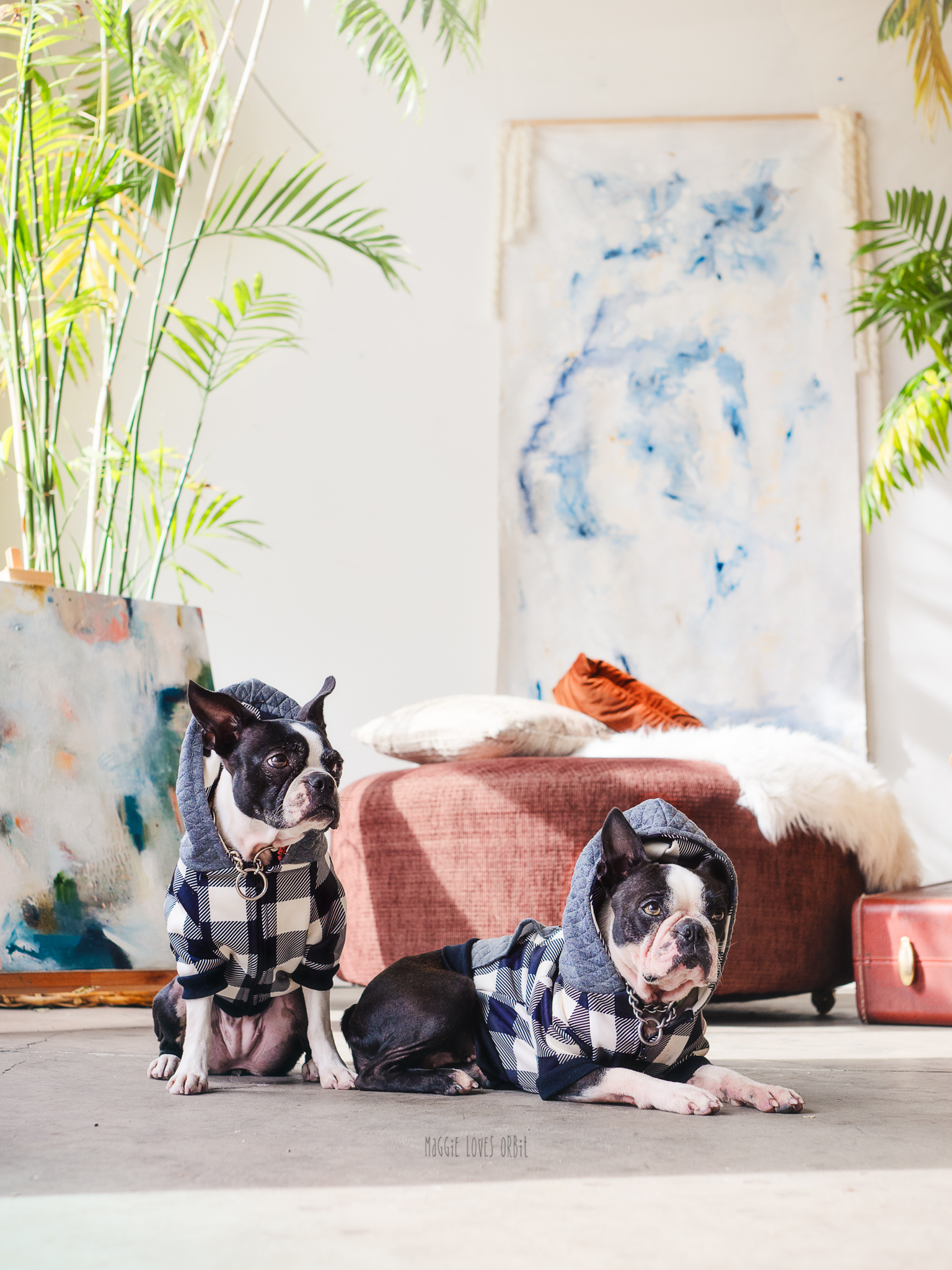 Cozy Hoodies for Boston Terriers