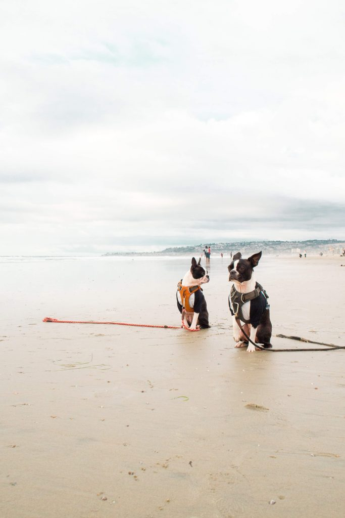 Is Mission Beach Dog Friendly