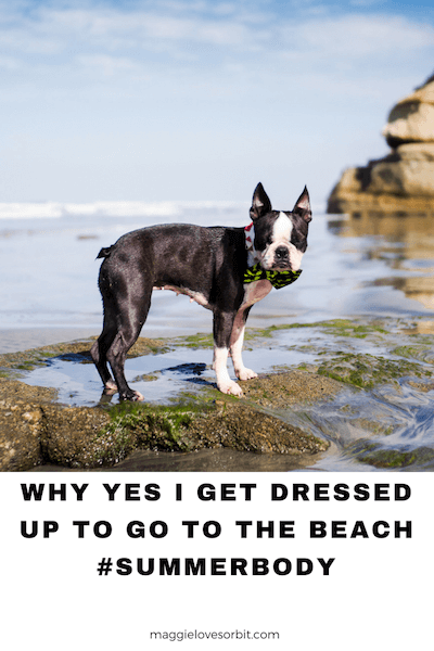 Best Dog Beach San Go Ca