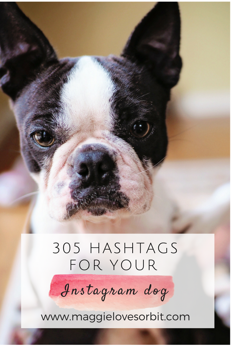 305 hashtags for your instagram dog