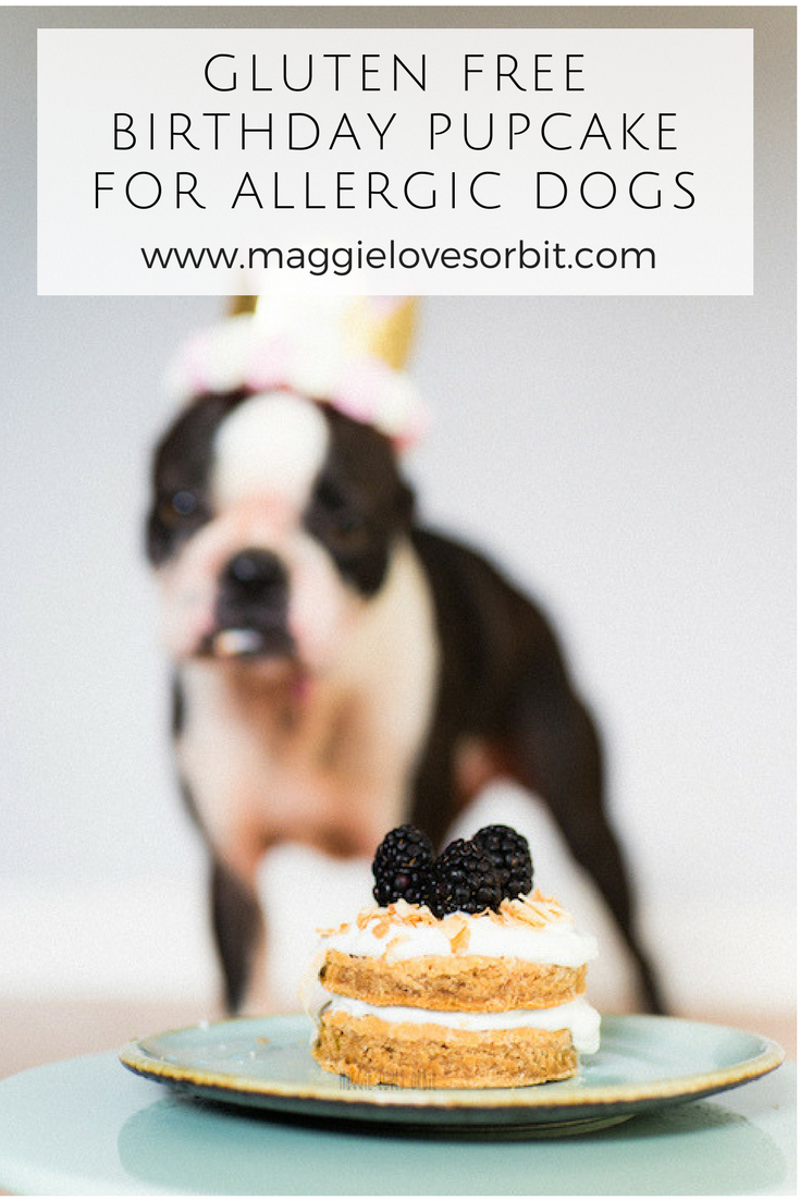 Gluten Free Birthday Cake For Dogs With Allergies