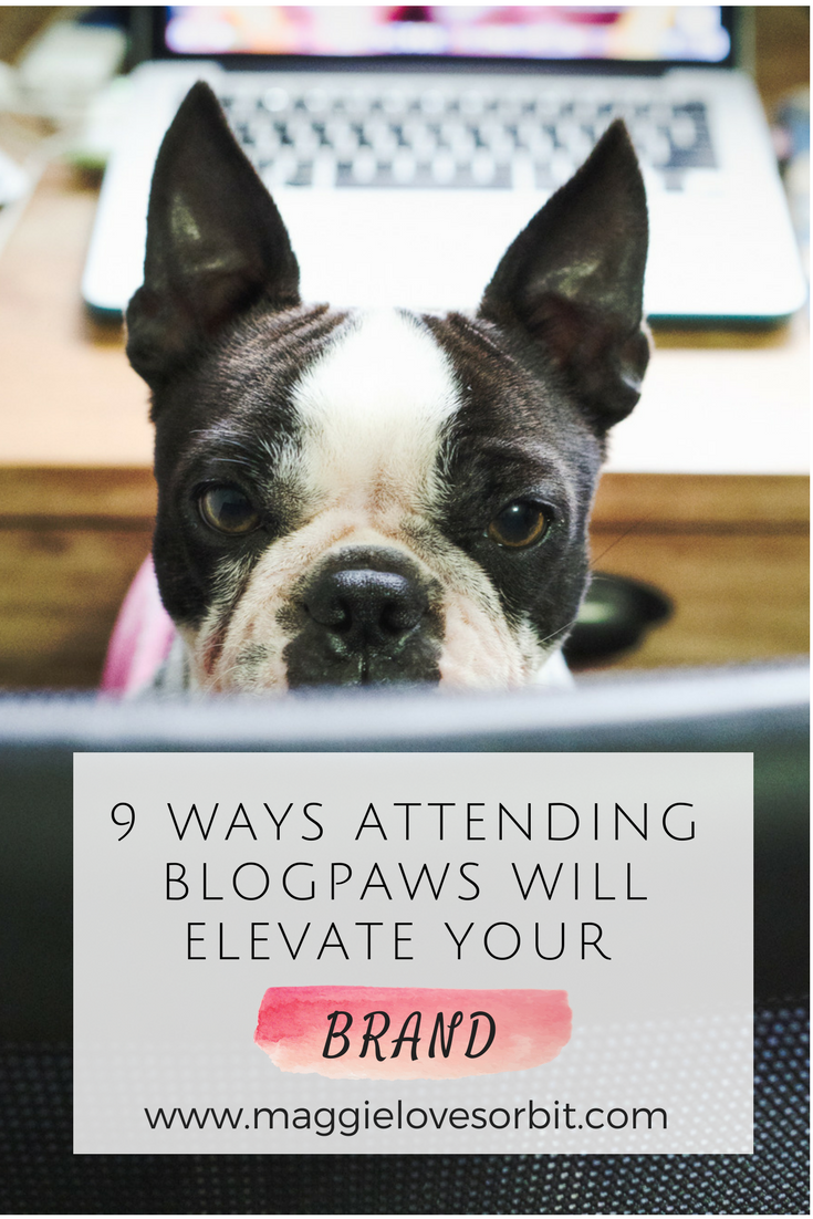 9 ways attending blogpaws will elevate your brand
