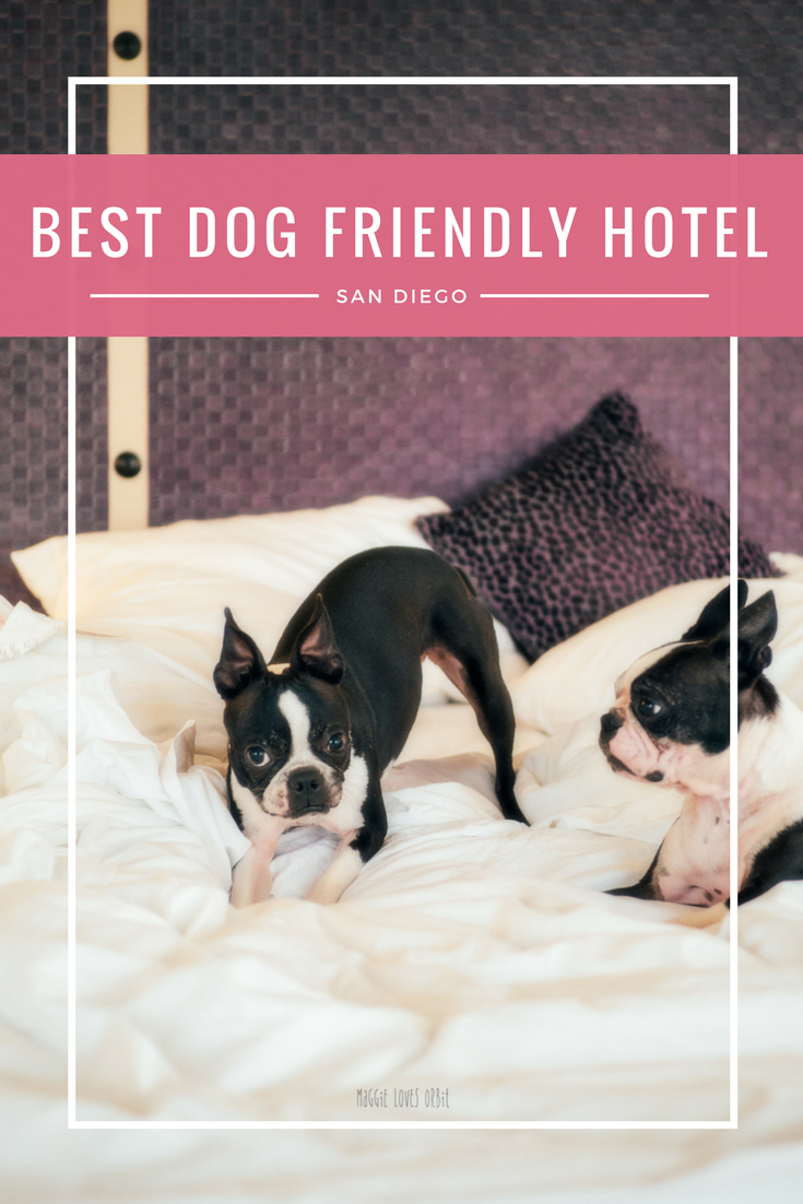 Best Dog Friendly Hotel San Diego Gaslamp Downtown