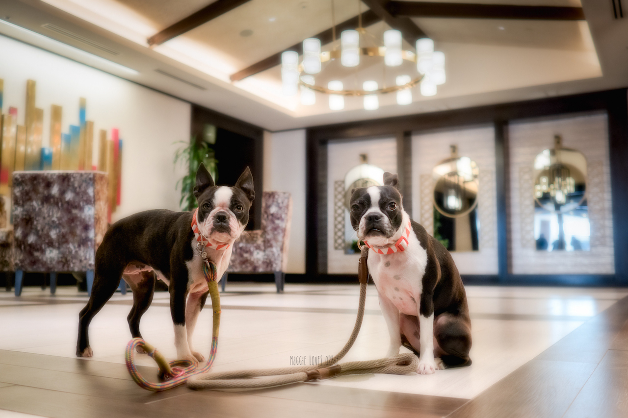 Hotel Solemar - best dog friendly hotel in San Diego Lobby