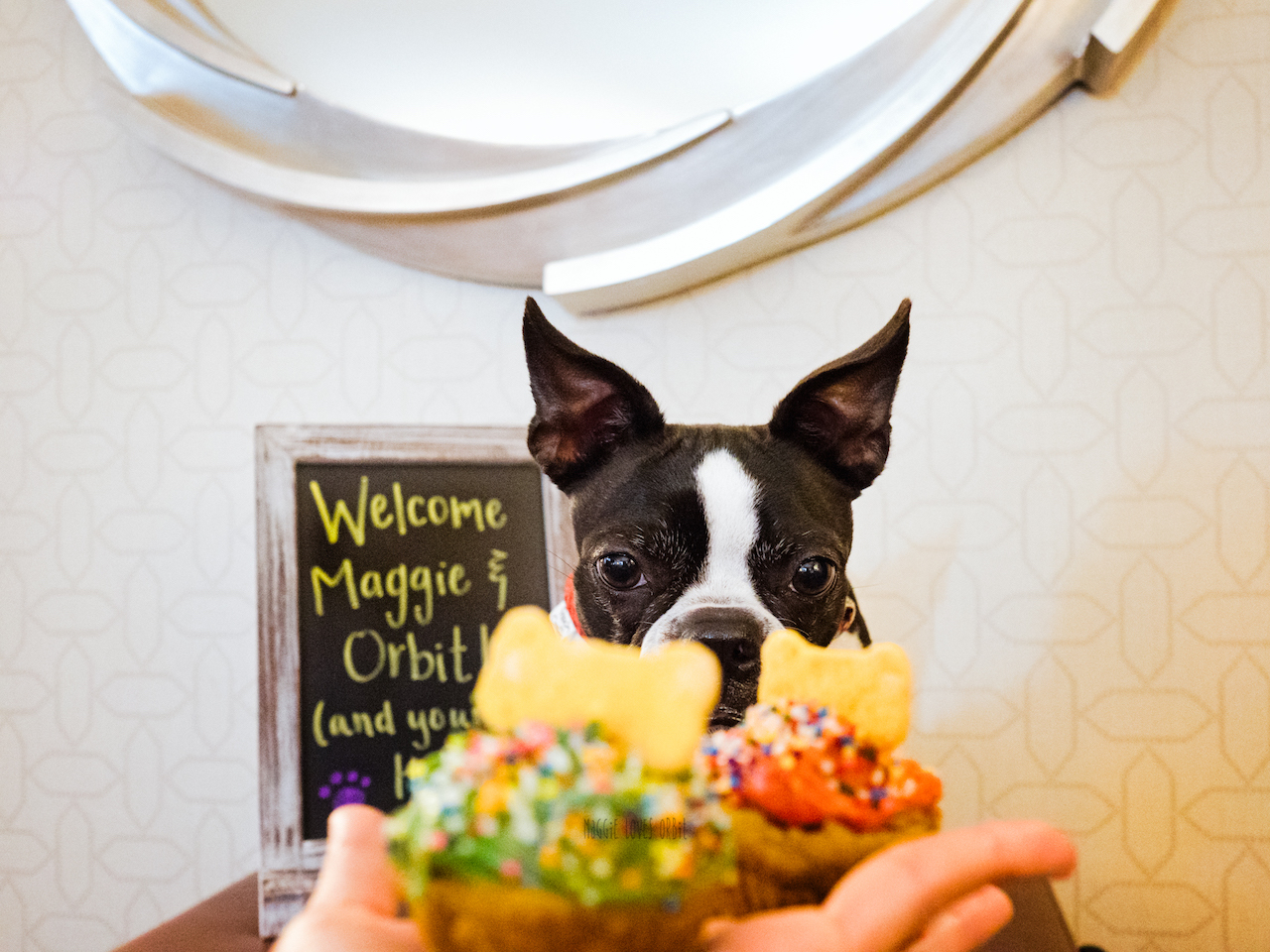 pet welcome amenity at Hotel Solemar Dog Friendly Hotel gaslamp San Diego