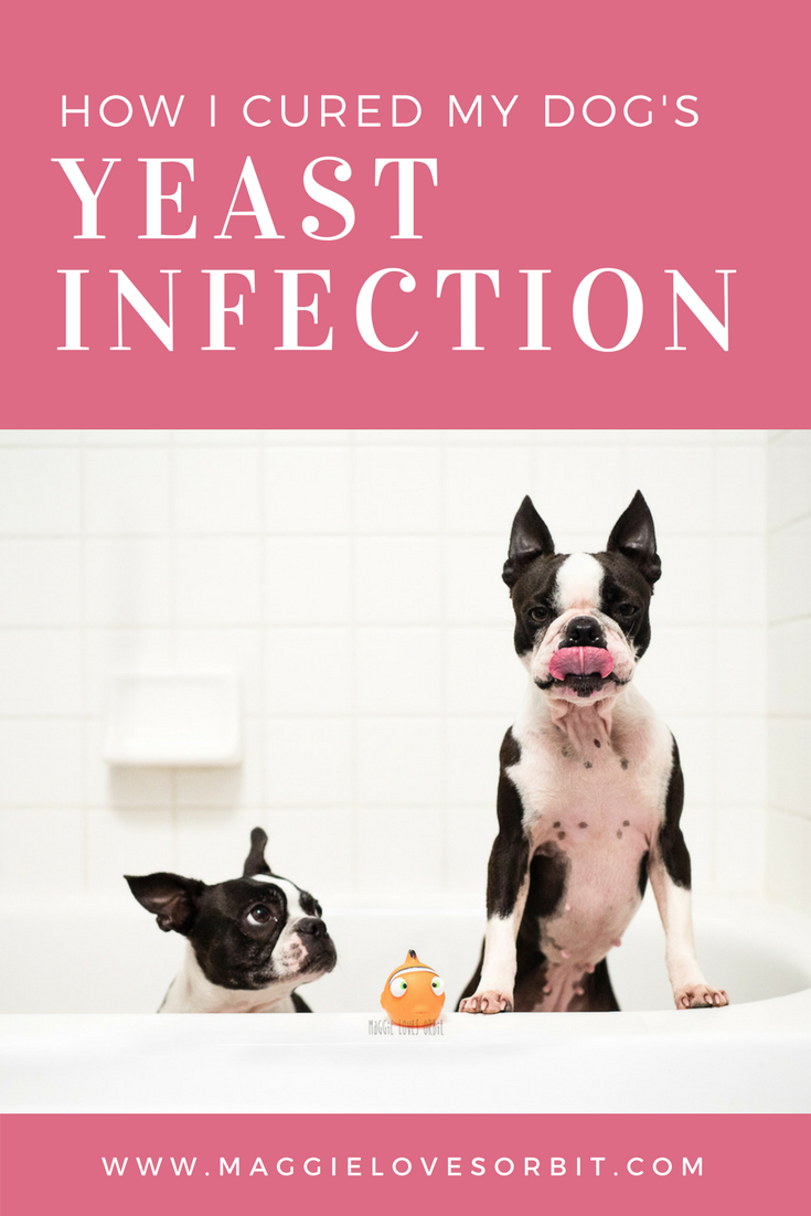 how I cured my dog's yeast infection