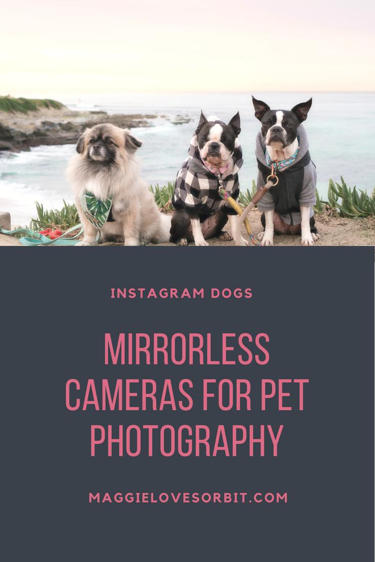 The Cameras I Use