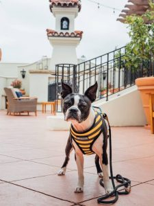 Dog Friendly Getaway to Santa Barbara