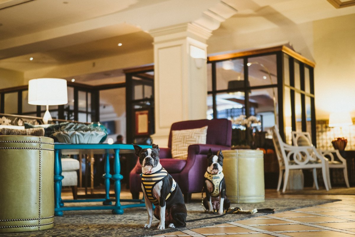 Canary-Hotel-Dog-Friendly-Santa-Barbara