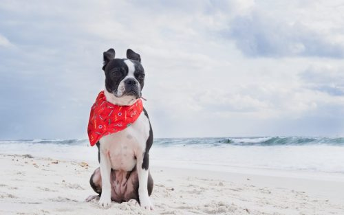363 Instagram Dog Hashtags