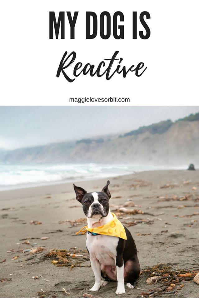 pinterest-photo-my-dog-is-reactive