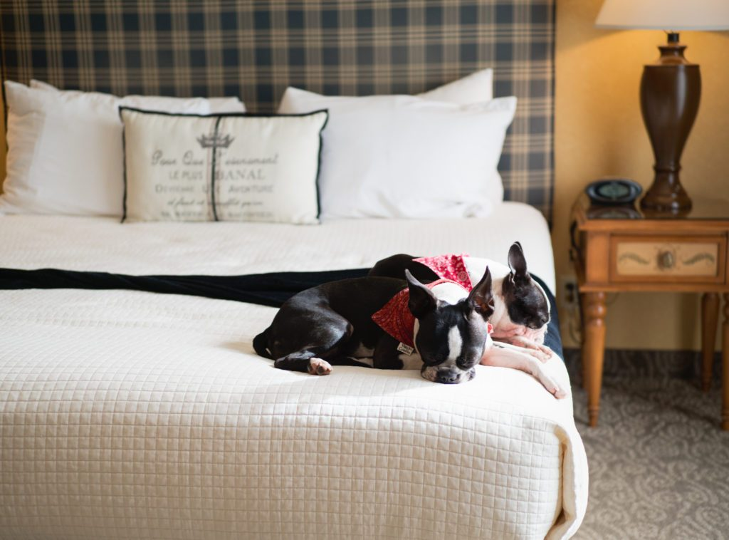Dog-Friendly-Cambria