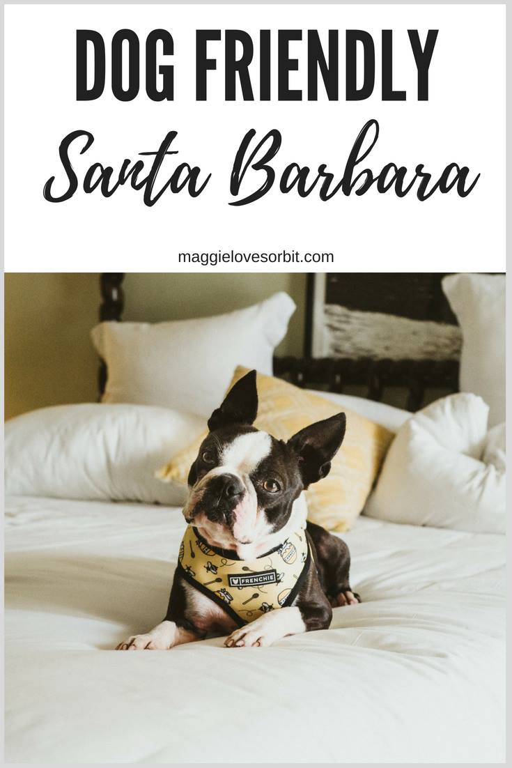 dog-friendly-hotel-santa-barbara-canary-hotel