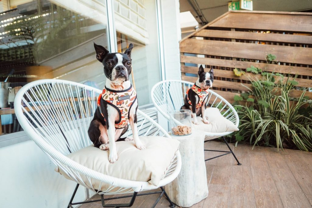 Best Dog Friendly Hotel in Santa Barbara