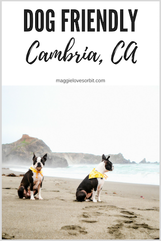 pinterest-photo-dog-friendly-cambria