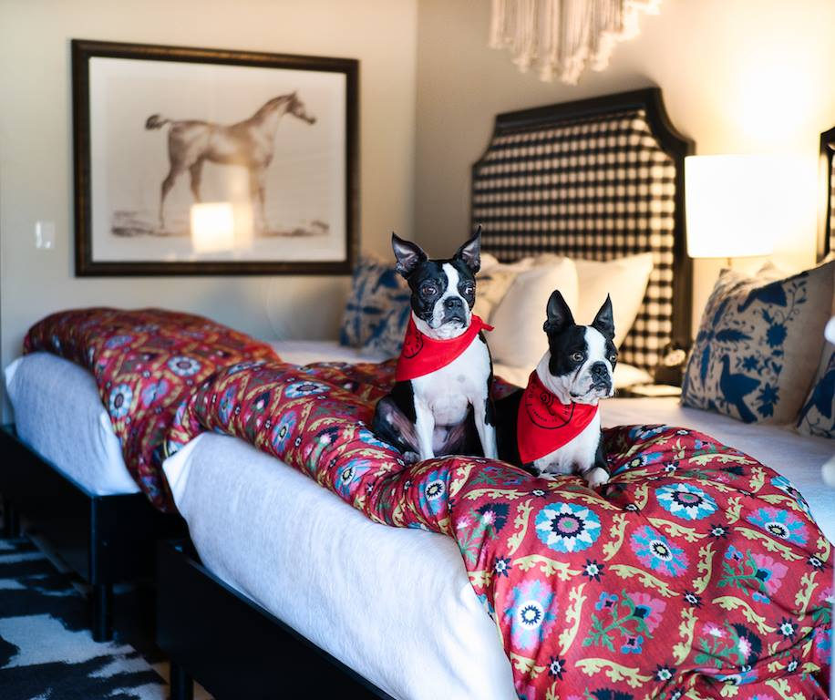 dog-friendly-vacation-cambria-oceanpoint-ranch