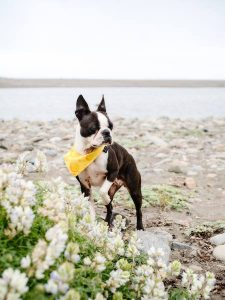 dog-friendly-vacation-cambria