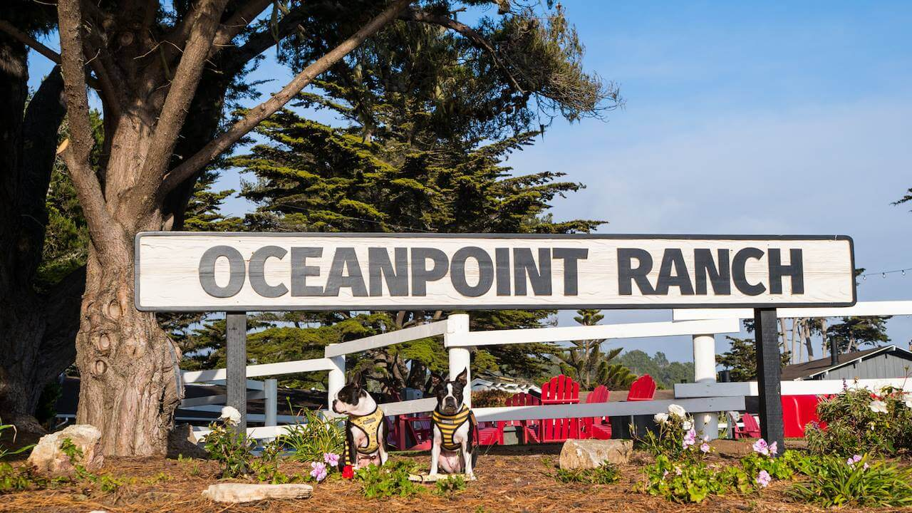 Dog Friendly Cambria Vacation – Oceanpoint Ranch Hotel