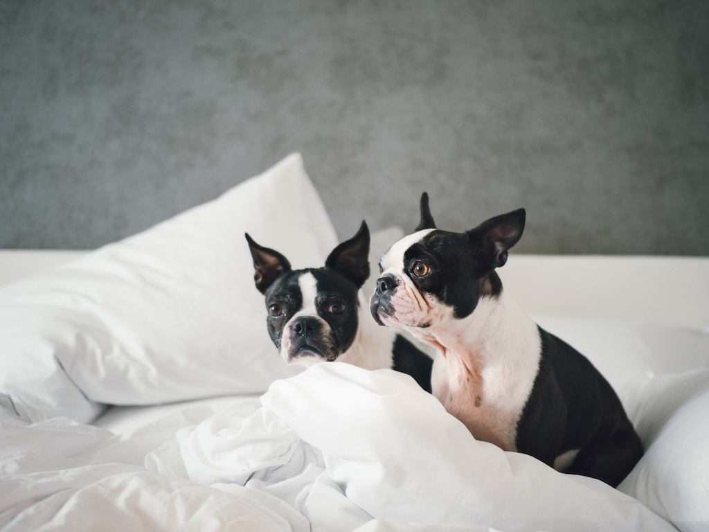 La Peer Hotel in West Hollywood CA [Dog Friendly]
