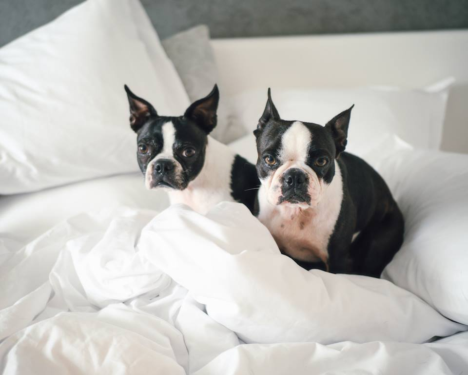 la-peer-hotel-kimpton-west-hollywood-dog-friendly