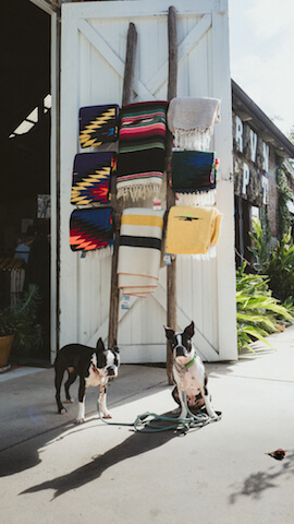 MaggieLovesOrbit-Ojai-dog-friendly-caravan-outpost