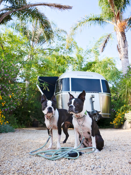 MaggieLovesOrbit-Ojai-dog-friendly-caravan-outpost-LALA-Airstream