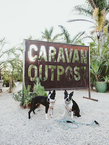 Glamping in Ojai with the Dogs • Maggielovesorbit com