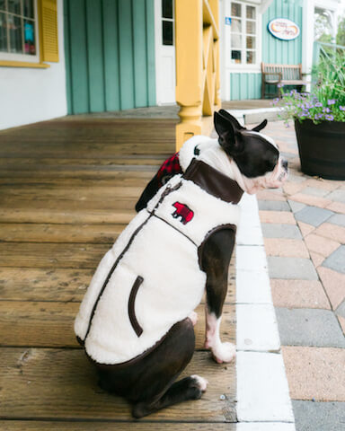 Fall Fashion Apparel at Petco For Dogs