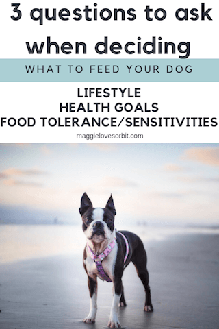 What-is-the-different-ways-I-can-feed-my-dog