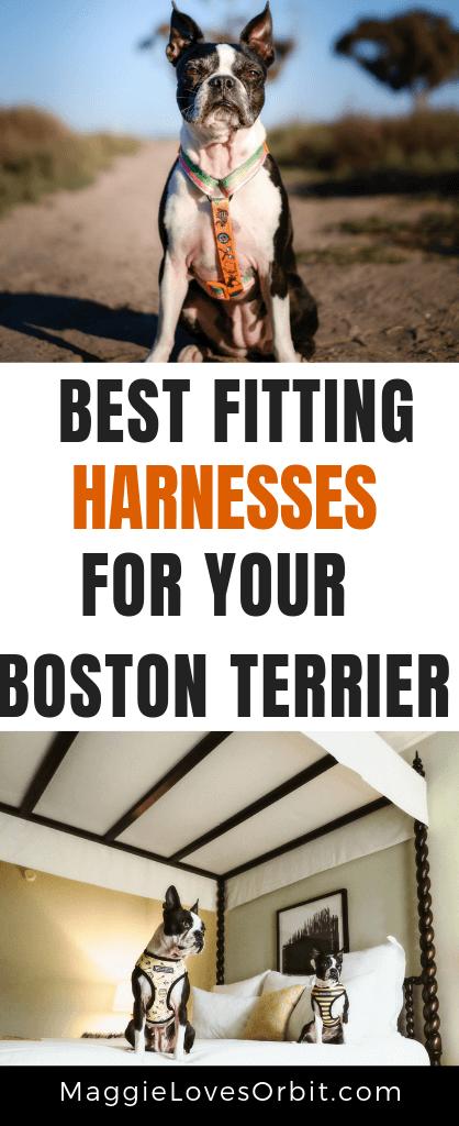 best-harness-boston-terrier